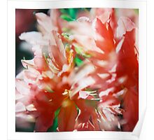 Rhododendron III. (square) Poster