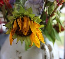 Dried Flowers by virginian