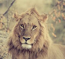 King! by Lyn Darlington