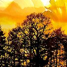 Daffodil Sky .. by Mike  Waldron