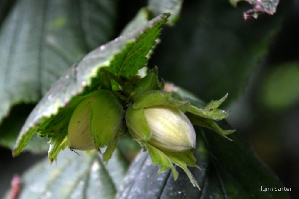 Hazel  Nuts by lynn carter
