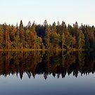 Nuuksio National Park by homesick