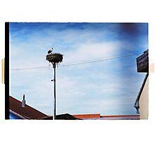 Stork's home Photographic Print