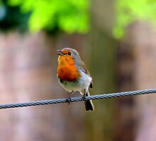 Bird on a Wire  by Barnbk02
