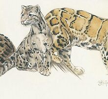 Clouded Leopard by BarbBarcikKeith