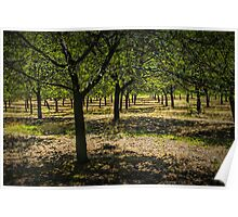 Michigan Orchard Poster