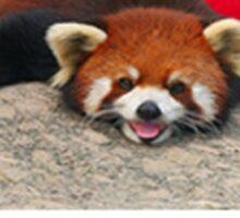 Danish Red Panda Sticker