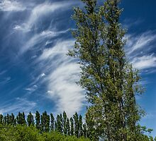 Orchard in West Michigan with Cirrus Clouds by Randall Nyhof