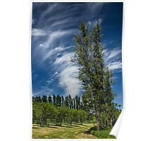 Orchard in West Michigan with Cirrus Clouds Poster