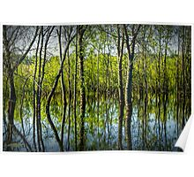 Tree Reflections in a Pond in West Michigan Poster