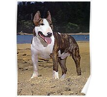 Bull Terrier Dog Portrait Poster