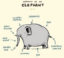 Anatomy of an Elephant by Sophie Corrigan