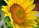 Sided Sunshine by Wviolet28