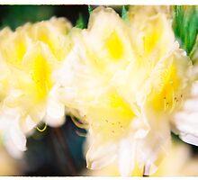 Rhododendron IV. by Zuzana Vajdova