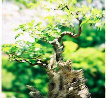 Bonsai Tree by Zuzana Vajdova