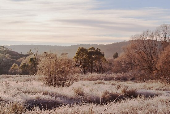 Frosty Morning by Deborah McGrath