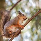 Squirrel up in the tree by Arve Bettum
