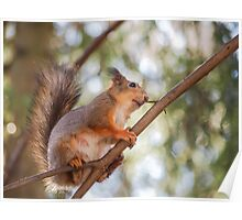 Squirrel up in the tree Poster