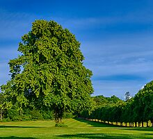 FORRES GRANT PARK IN JULY by JASPERIMAGE