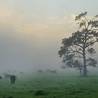 foggy farm in Margaret River by metriognome