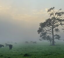 A Take on Margaret River by metriognome