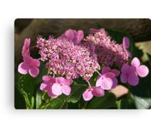 Hydrangea; Lakewood, CA USA May 2013 Please Read Description Canvas Print