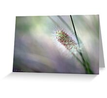 Garden Dreaming Greeting Card