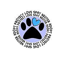 Animal Adoption Cards  Photographic Print
