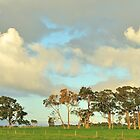 remnant red gums by metriognome