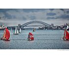 Sports Boat Panoramic - Sydney by Beth  Morley