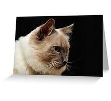 rag doll cat #2 Greeting Card