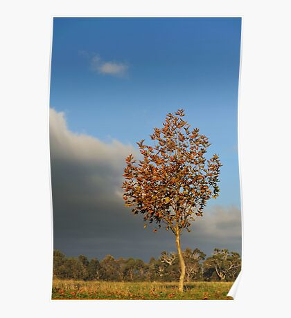 tree and storm cloud Poster