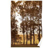treeline in apricot light Poster