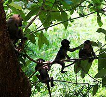 On the Monkey Bars -   Lake Manyara Tanzania by john  Lenagan