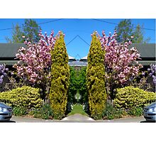 Blossoms in Akaroa Photographic Print