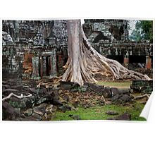 Ta Prohm Temple Ruins in Cambodia Poster