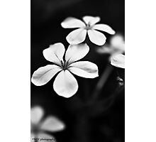 Floral Study Photographic Print