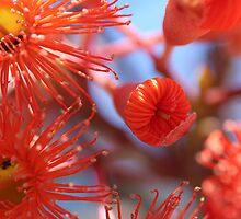 Gum blossom by emsta