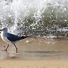 The Seagull by dozzam