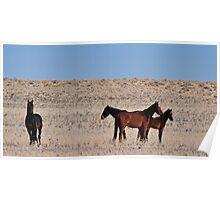 Wild Namib horses Poster