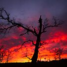 Sunrise, Jindabyne Road, New South Wales, 2013 by Graham Schofield