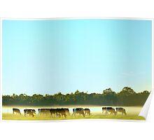 dairy herd Poster