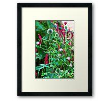 Romantic summer garden with globe thistle Framed Print