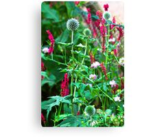 Romantic summer garden with globe thistle Canvas Print