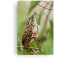 Fresh from the Nest! Canvas Print