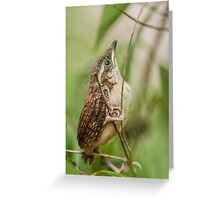 Fresh from the Nest! Greeting Card