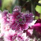 Pinks by decorartuk