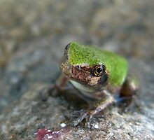 Tiny Frog Refugee by Patrick Bate