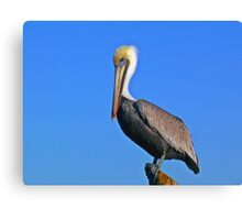 Pelican and blue sky Canvas Print