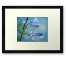Blue Nile Iris Framed Print